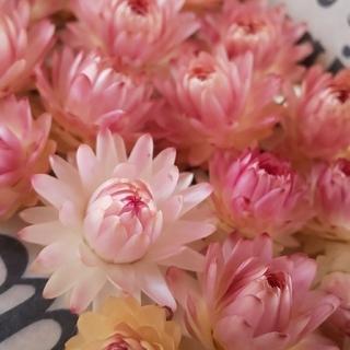 花材 花かんざしヘッドとヘリクサリムドライフラワー セット(ドライフラワー)