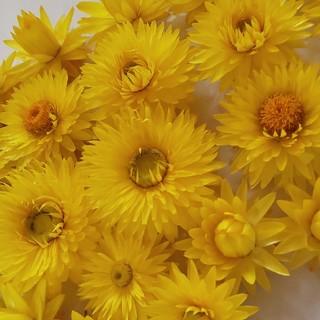 花材 セット ヘリクサリム イエロー 花かんざしヘッド ドライフラワー(ドライフラワー)