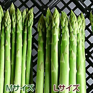 グリーンアスパラ 500g アスパラガス(野菜)