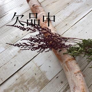 ドライフラワー アスチルベ  北海道花材(ドライフラワー)