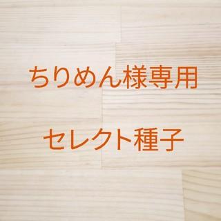 ちりめん様専用 セレクト種子 4袋(野菜)