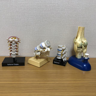 人体骨格模型 4個 Voltaren(健康/医学)