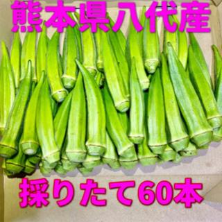 熊本県八代産 オクラ ブルースカイ60本(野菜)