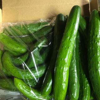阿蘇のきゅうり 1.5kg普通サイズとミニサイズ詰め合わせ次回発送7月23日(野菜)