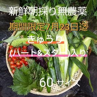 野菜箱詰め【野菜おまかせ♪おためし野菜セット】新鮮朝採り★無農薬野菜(野菜)