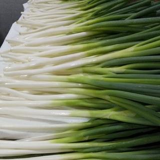 ※残りわずか❗️鳥取県境港産 白ねぎ(長ねぎ) 3kg(野菜)
