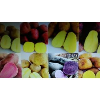 カラフルポテト祭り‼️1.5㌔(野菜)