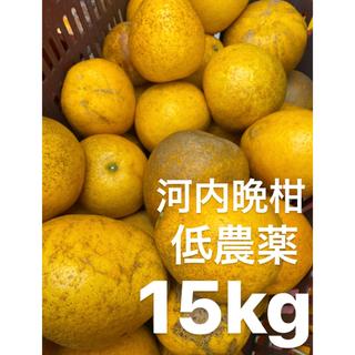 ふるる様専用 愛媛 低農薬 宇和ゴールド15Kg   河内晩柑 みかん(フルーツ)