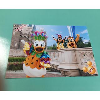 デイジー(Daisy)のディズニーランドスペシャルフォト原版2016ドナルドグーフィープルートハロウィン(キャラクターグッズ)
