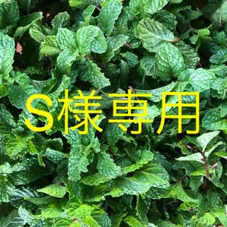 S様専用スペアミント(野菜)