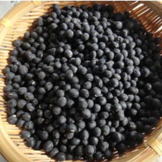 丹波黒枝豆 種 無農薬(野菜)