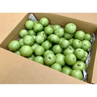 産地直送 減農薬 桃太郎 グリーントマト 摘果トマト 約6kg(野菜)