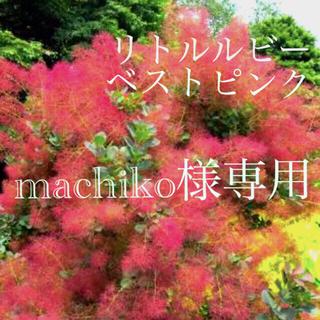 machiko様専用 リトルルビー ベストピンク(その他)