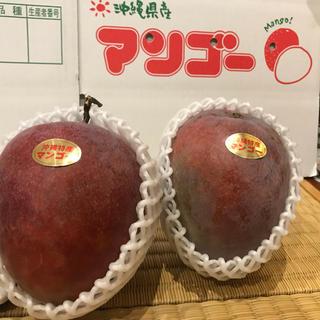 レッドキーツマンゴー  1.5キロ 2玉 沖縄産(フルーツ)