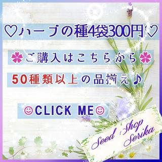 (722A)全54種♪ ハーブの種 お好きな物 4種類 セット(その他)