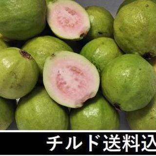 『ピンクグァバ(小玉)1キロ』お試しSセット チルド送料込 柔らか品種(フルーツ)