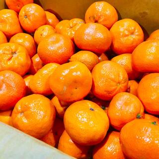 ハニーマンダリンオレンジ10kg 訳あり激安全国送料無料(フルーツ)