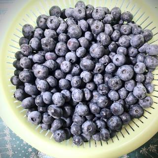群馬県産ブルーベリー 冷凍5キロ(フルーツ)