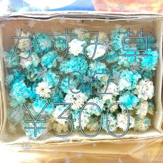 かすみ草 ドライフラワー 薄ブルー&ホワイトmix(ドライフラワー)