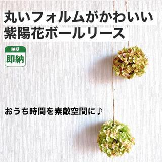 紫陽花ボール【即納】ドライフラワー フラワーボール ボールリース インテリア (ドライフラワー)