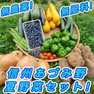 ブルーベリー付き 夏野菜セット 無農薬 減農薬 長野県 あづみ野産 2kgセット(野菜)