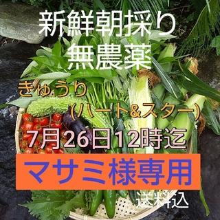 野菜箱詰め【野菜おまかせ♪野菜お試しセット】無農薬野菜(野菜)