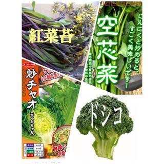 今がまきどき★伝統野菜★種セット 海外野菜(野菜)