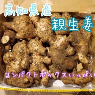 高知県産 親生姜1キロ以上 コンパクト(野菜)