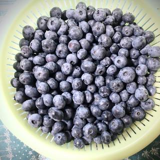 2nikau様 群馬県産 生ブルーベリー5キロ(フルーツ)