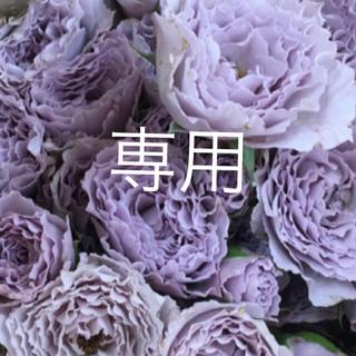 ライラックの美しい薔薇(その他)