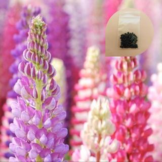 豪華さが魅力♡『ルピナス』花の種100粒(その他)