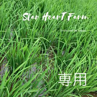 🌟【だて正夢10キロ】史上最強🌟もっちもちツヤツヤ🌙(米/穀物)