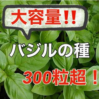 【有機オーガニック種子】バジルの種 たっぷり300粒以上‼️家庭菜園 野菜ハーブ(野菜)