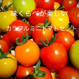 ミニトマトカラフルMIX1キロ(アイコ入)(野菜)