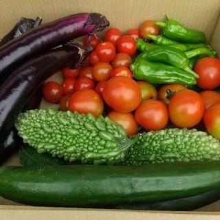 岐阜県産の、夏野菜の詰め合わせです。(野菜)