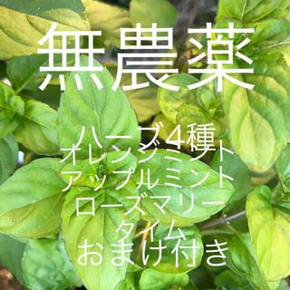 無農薬ハーブ4種セット根っこ付き苗おまけ付き(野菜)