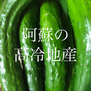 かえ様 専用ページ 阿蘇のきゅうり1.5kg  (野菜)