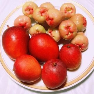 レアな沖縄産フルーツ!レンブ と甘く美味しい!ミニマンゴー のセット!(フルーツ)