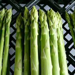 【専用】太アスパラ3kg(野菜)