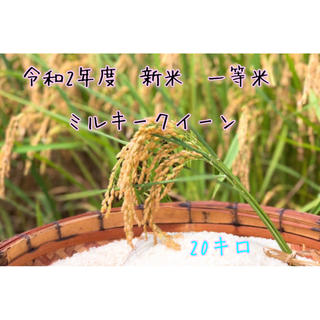 令和2年度 新米 ミルキークイーン 玄米(米/穀物)