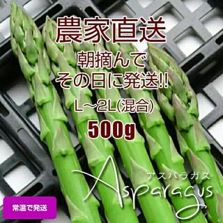 太アスパラ 500g アスパラガス 新鮮野菜(野菜)