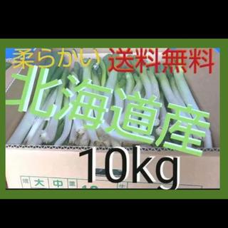 北海道  長ねぎ 10kg 農家直送【訳あり】発送7月25日以降(野菜)