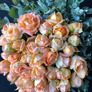 バラ 切り花 モンシュシュ(淡いオレンジ)&ユーカリセット 50本 30センチ(その他)