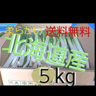北海道  長ねぎ 5kg 農家直送【訳あり】発送7月25日以降(野菜)