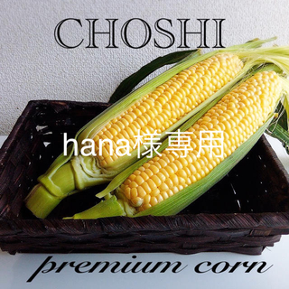 千葉県銚子産甘ーいトウモロコシ 冷蔵便(野菜)
