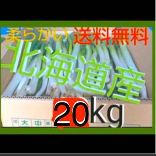 北海道  長ねぎ 20kg 農家直送【訳あり】発送7月25日以降(野菜)