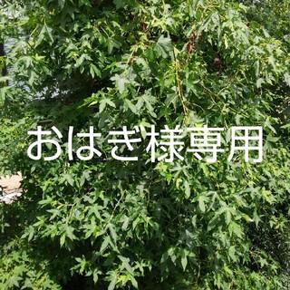 エルディ タンポン 青1 緑1(その他)