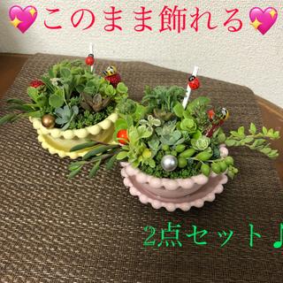多肉植物❤︎寄せ植え❤︎そのまま飾れます♪2点セット♪(その他)