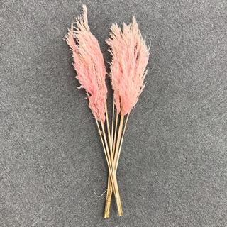 【大幅値下げ】ドライフラワー すすき ピンク 10本(ドライフラワー)