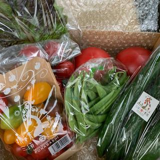 朝採り夏野菜セット お野菜6〜7種類(そのうちトマト2〜3種類)(野菜)